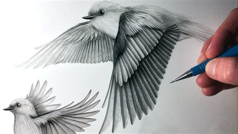How to Draw Birds Flying   YouTube   Bird drawings, Birds ...