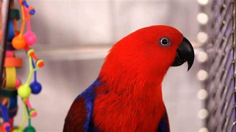 How to Groom a Bird | Pet Bird   YouTube
