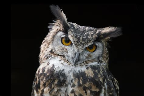 How to Identify and Observe Nocturnal Birds