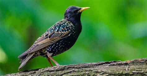 How to Identify the UK s 10 Most Common Wild Birds