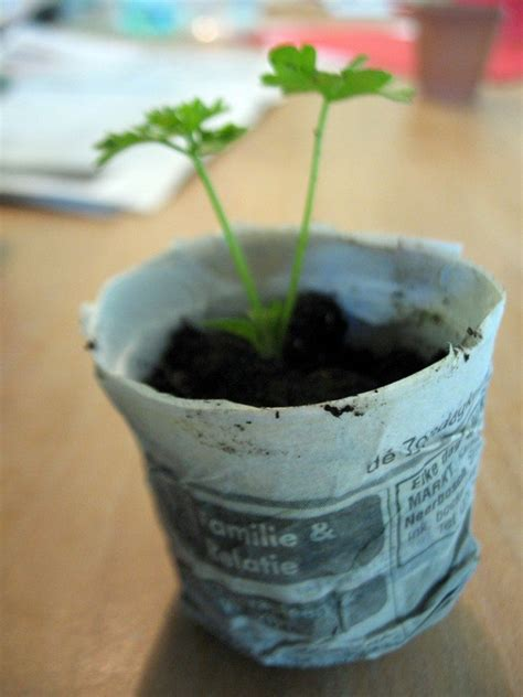 How To Make Biodegradable Newspaper Seedling Pots – Craft ...