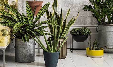 How to make the most of house plants | Life and style ...
