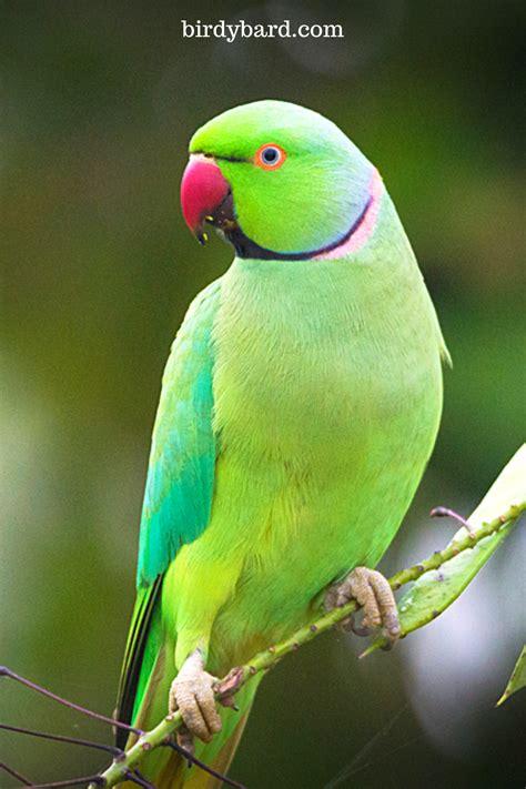 How to pet birds   Parrot in 2020 | Pet birds parrots ...