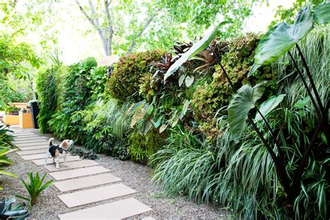 How to Plant a Living Wall   Sunset Magazine