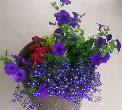 How to Plant Outdoor Potted Flowers