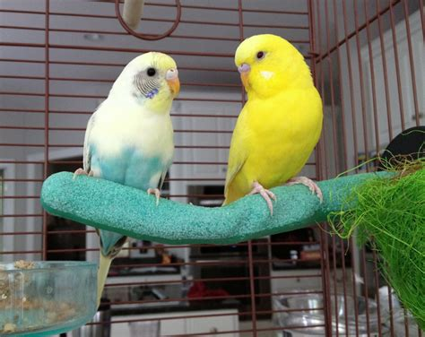 How to Prepare to Adopt a Pet Bird and Bring Your New Bird ...