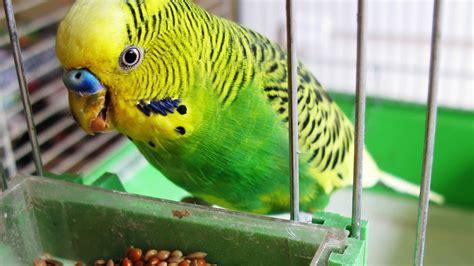 How to Quiet a Bird | Pet Bird   YouTube