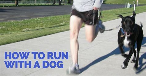 How to Run With A Dog   ThatMutt.com