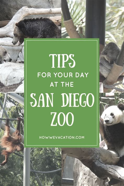 How to See San Diego Zoo in One Day! | San diego zoo ...