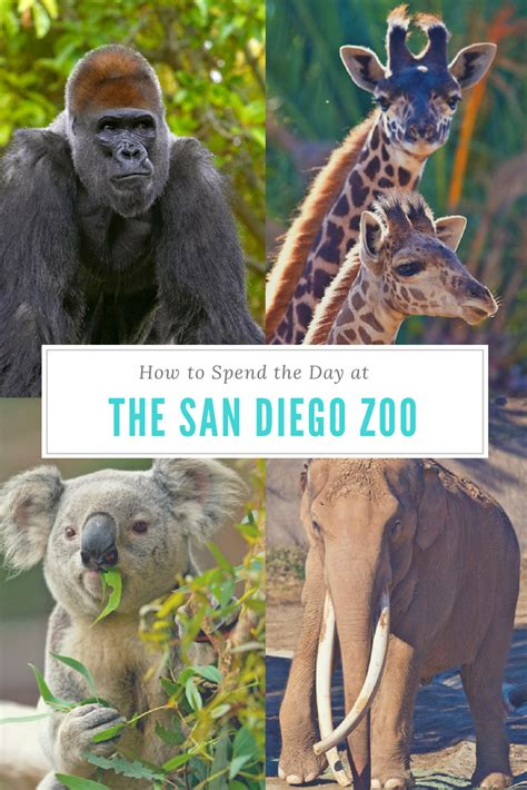 How To Spend The Day at the San Diego Zoo | San diego zoo ...