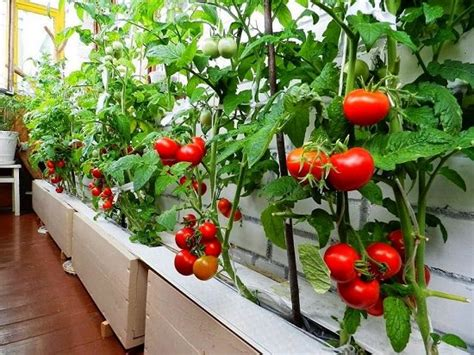 How to Start A Balcony Vegetable Garden | Growing ...
