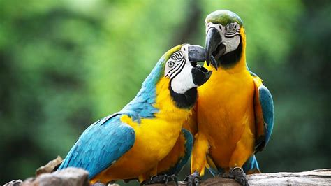 How to Take Care of a Macaw   Pet Bird   YouTube