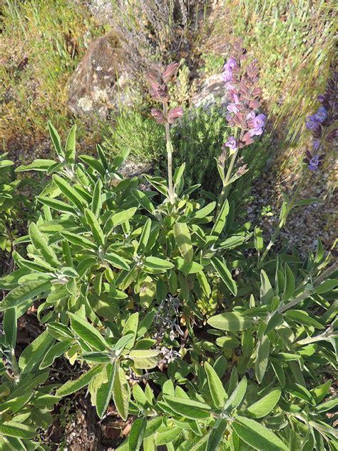 http://www.elhogarnatural.com/aromaticas.htm | Plantas ...