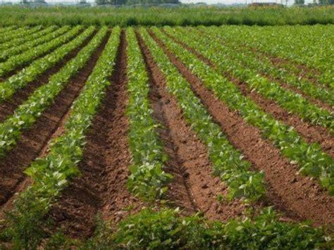 Huelva es la primera provincia andaluza en ganadería ...