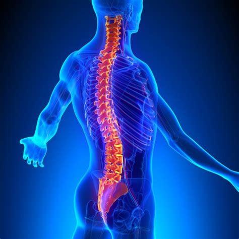 Huesos de la Columna Vertebral: Anatomía, función, tipos ...