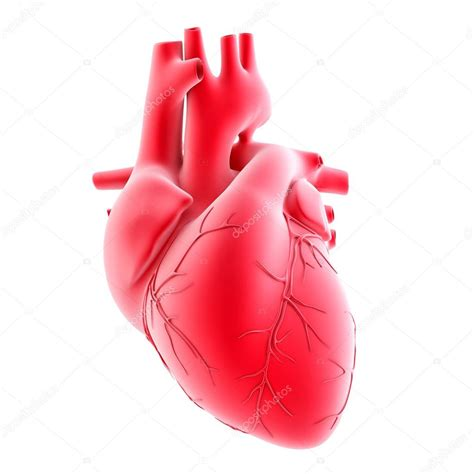 Human heart 3d image | Human heart. 3d illustration ...