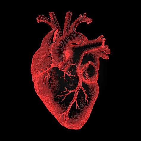 human heart  anatomical rendering on dark background ...