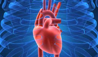 Human Heart: Anatomy, Function & Facts | Live Science