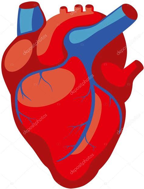 human heart anatomy — Stock Vector  asvitt #106828946