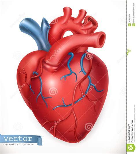 Human Heart. Medicine, Internal Organs. Vector Icon Stock ...