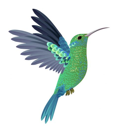 Hummingbird | Free Vectors, Stock Photos & PSD