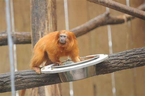 Hunt on for 17 rare monkeys stolen from French zoo | New ...