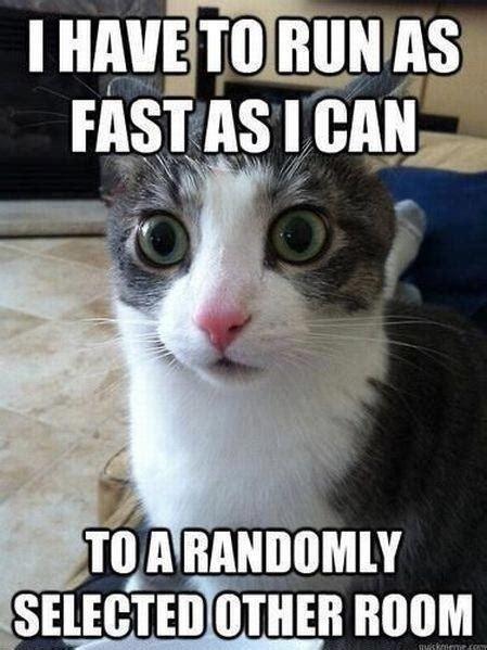 I Have To Run Cat Meme   Cat Planet | Cat Planet