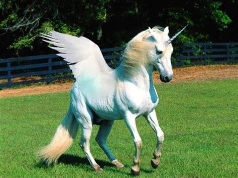 I Saw a real life unicorn!?!?   YouTube