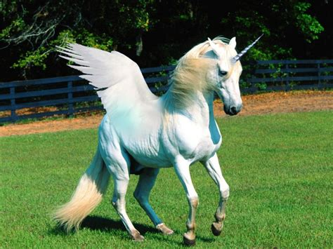 I WANT TO BELIEVE: Pictures of Unicorns That We Hope and ...