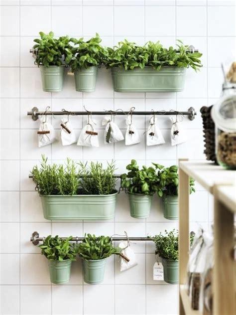 Ideas para cultivar plantas aromáticas decorando la cocina ...