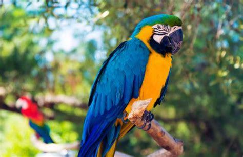Identificación de aves: loros azules más comunes   Perritos HC