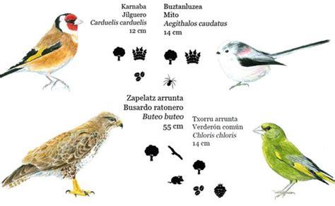 Identificadas 99 especies de aves nidificantes en Donostia ...