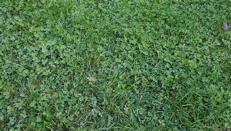 Identificar malas hierbas