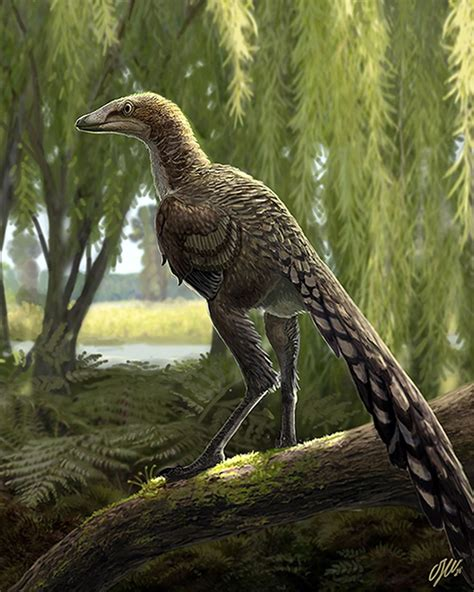 Identified a new carnivorous dinosaur that lived in the ...