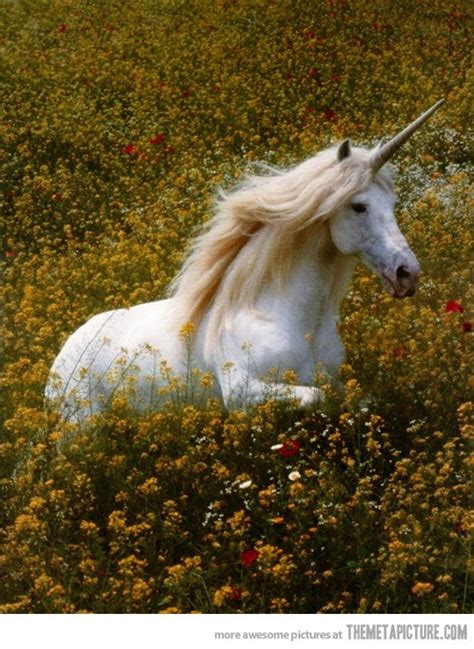 If unicorns were real, they would be magical… | Real ...