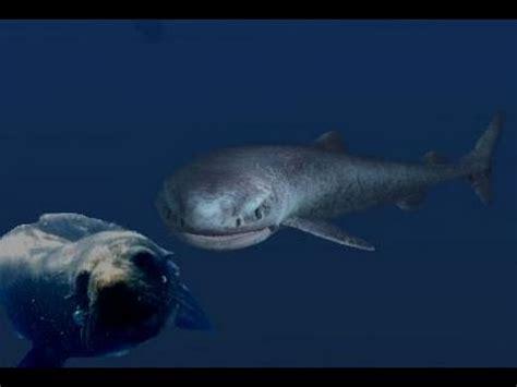 Il Gigantesco e Misterioso Squalo della Groenlandia   YouTube