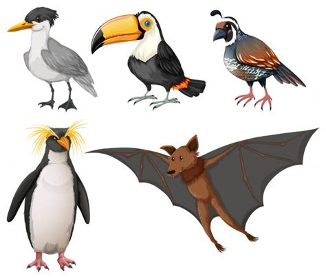 Illustrazione di diversi tipi di uccelli selvatici ...
