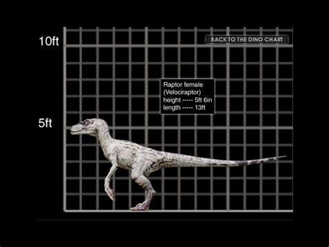 Image   1024x768 Velociraptor female size chart.jpg ...