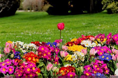 Image De Fleurs A Télécharger Gratuitement • Les plus ...