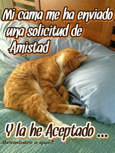 Imagen de buenas noches | Meme gato, Humor divertido sobre ...