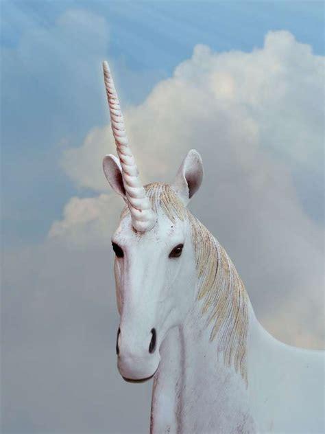 Imagen de Primer plano de unicornio blanco   【FOTO GRATIS ...