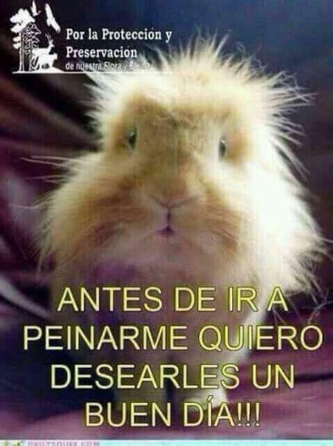 Imagen de Toni Arce en Buenos dias | Frases graciosas de ...