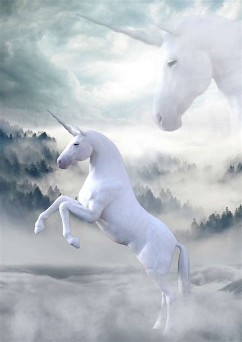 Imagen de Unicornios reales   【FOTO GRATIS】 100011197