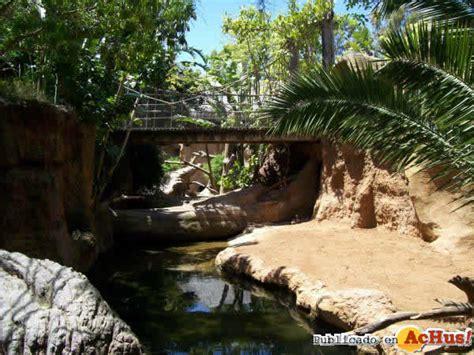 Imagen de Zoo Fuengirola Hipoptamo Pigmeo