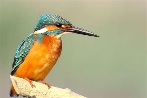Imagen gratis: alas, pájaro, colorido, exótico, plumas, de ...