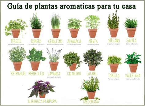 Imagen relacionada | hierbas aromaticas | Plantas jardin ...