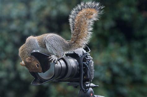 Imágenes: animales curiosos por la fotografía   Planeta Vivo