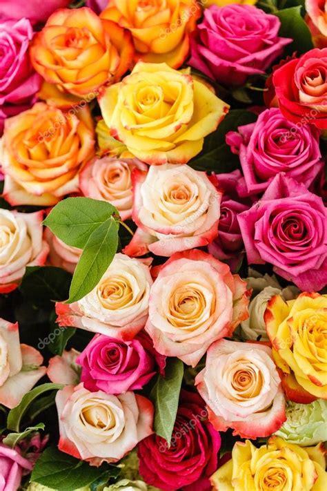 Imágenes: bonitas de flores | flores color de rosa bonitas ...