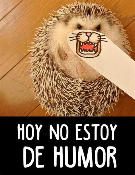 Imágenes chistosas y divertidas, fotos graciosas con frases