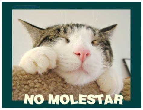 Imágenes con frases divertidas sobre perros y gatos ...